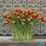 Tulp Denmark rood-geel