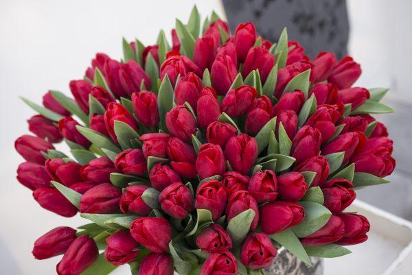 Tulp Ile de France rood