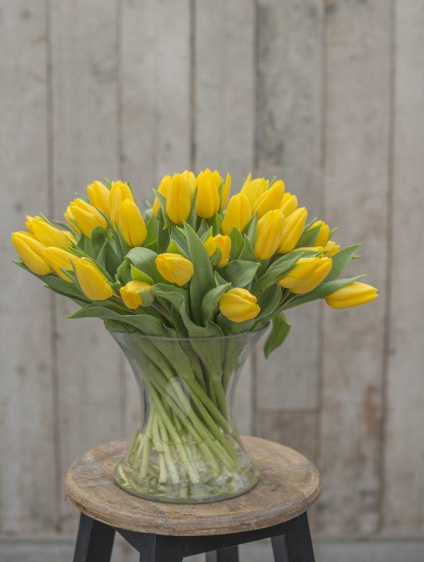 Gele tulp Strong Gold