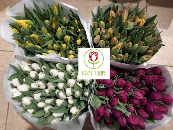 200 tulpen in 4 kleuren