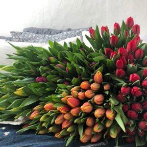 200 Tulpen 4 kleuren