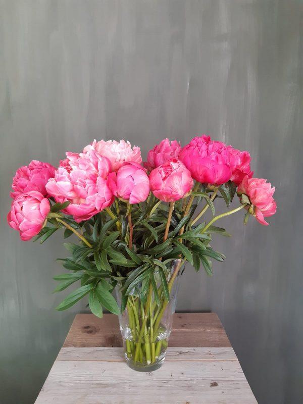 Pioenen roze